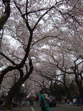 2009_04_04_017